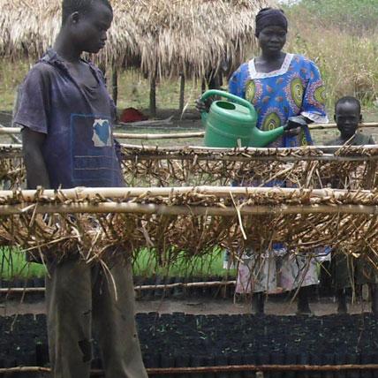Sostegno della salvaguardia del patrimonio forestale di Koboko (Uganda) e della Chefferie des Kakwa (RDC)