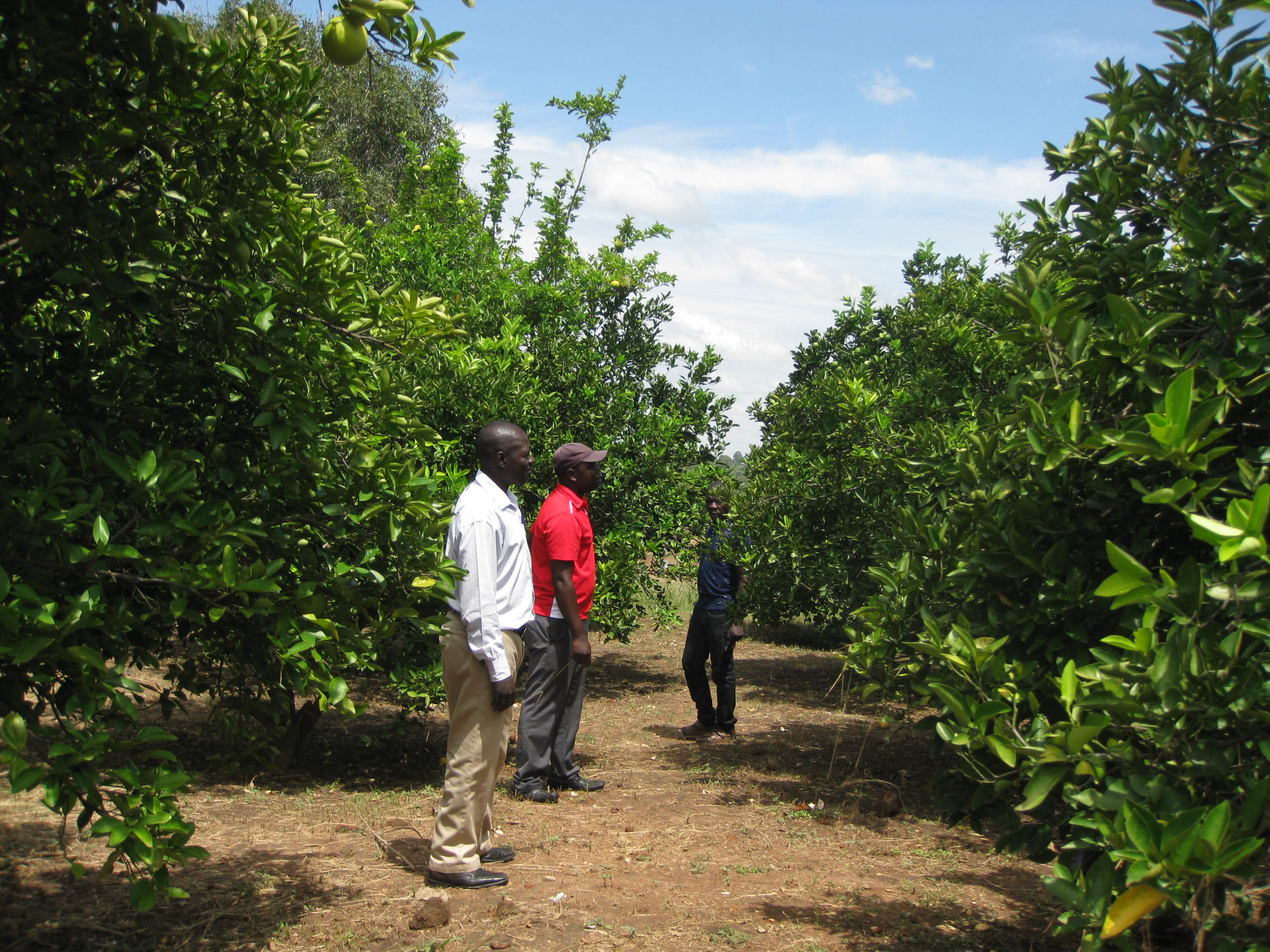 WEALTH CREATION THROUGH FRUCTICULTURE IN THE WEST NILE